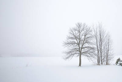 Photograph - Winter Fog And Trees by Bernard Lynch