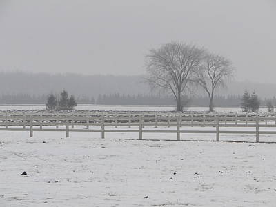 Winter Fog On The Paddocks Art Print