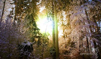 Winter Forest Art Print