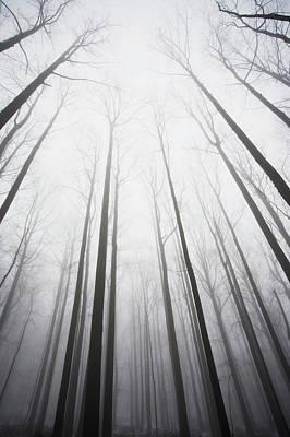 Winter Forest In Mist Art Print by Jack Flash