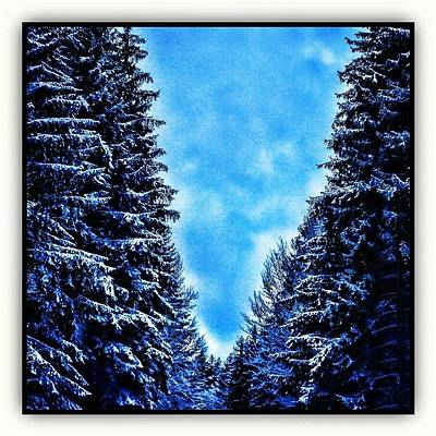 Forest Photograph - Winter Forest by Paul Cutright