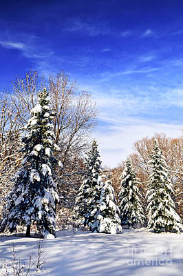 Park Scene Photograph - Winter Forest Under Snow by Elena Elisseeva