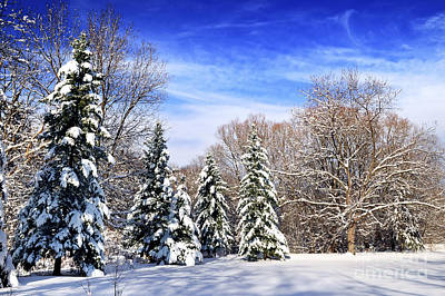Park Scene Photograph - Winter Forest With Snow by Elena Elisseeva