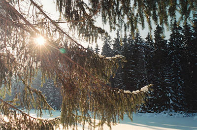Photograph - Winter by Franz Roth