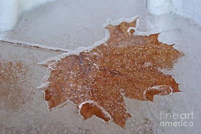Photograph - Winter Freeze by Margie Avellino
