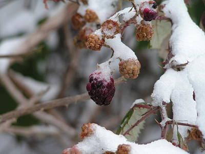Winter Fruit Art Print