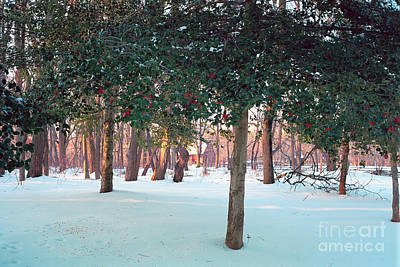 Winter Holly Art Print by George Oze