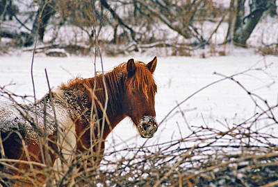 Photograph - Winter Horse Landscape by Steve Karol