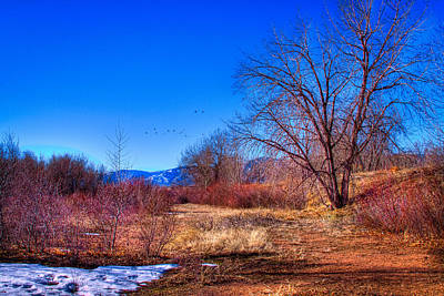 Photograph - Winter In South Platte Park by David Patterson