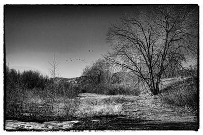 Photograph - Winter In South Platte Park II by David Patterson