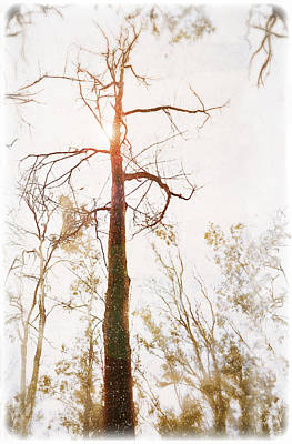 Winter In The Woodlands Art Print by Erica Horsley
