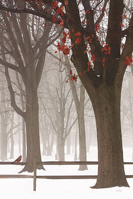 Winter In The Woods Art Print by Tom York Images