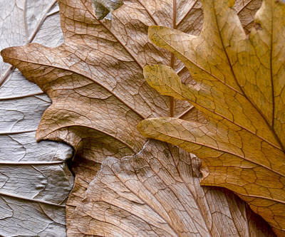 Photograph - Autumn Leaves Of Gold by Carolyn Marshall