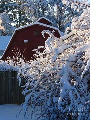 Winter Look Art Print by Greg Patzer