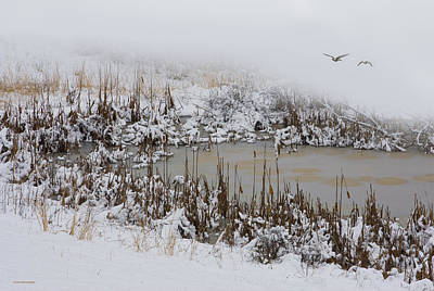 Canadian Marsh Photograph - Winter Marsh by Ron Jones