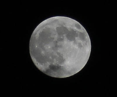 Photograph - Winter Moon by Donna L Munro