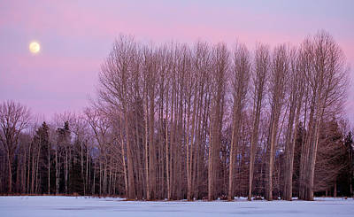 Photograph - Winter Moon by Marie-Dominique Verdier