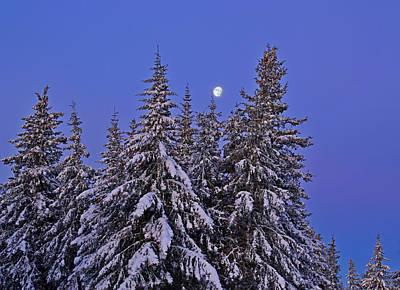 Art Print featuring the photograph Winter Night by Michele Cornelius