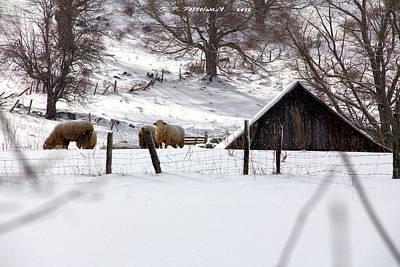 Winter On The Farm Art Print by Carolyn Postelwait