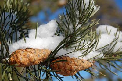 Winter Pine Cones Art Print