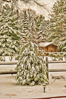 Shed Digital Art - Winter Pine by Mary Timman