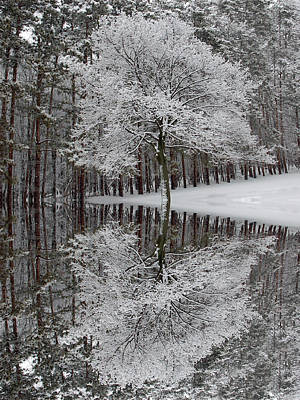 Photograph - Winter Reflection by Aimee L Maher ALM GALLERY
