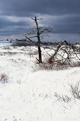 Winter Shenandoah National Park Art Print by Thomas R Fletcher