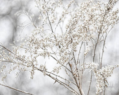 Photograph - Winter Sight by Traci Cottingham
