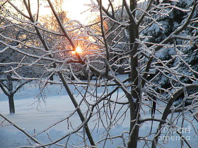Digital Art - Winter Sun Light by Vicky Tarcau