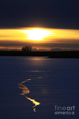 Photograph - Winter Sunset by Alyce Taylor