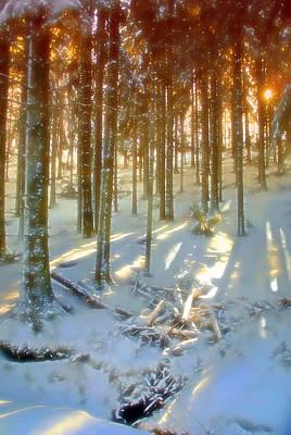 Winter Sunset Art Print by Rod Jones