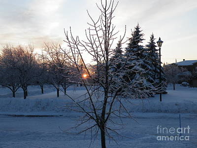 Digital Art - Winter Sunset by Vicky Tarcau