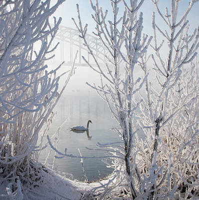 Winter Landscapes Photograph - Winter Swan by E.M. van Nuil