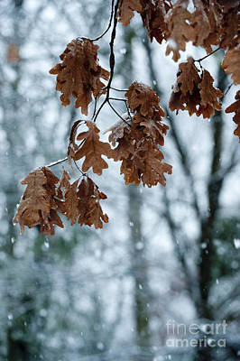 Photograph - Winter Takes Hold by Sandra Bronstein