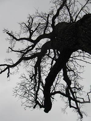 Photograph - Winter Tree-1 by Todd Sherlock