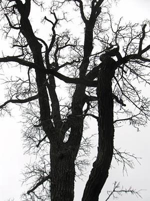 Photograph - Winter Tree-2 by Todd Sherlock