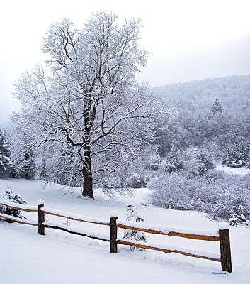 Winter Tree And Fence In The Valley Art Print