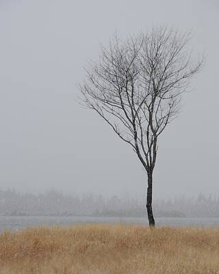 Photograph - Winter Tree by Jeffrey Swank