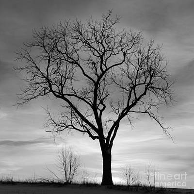 Photograph - Winter Tree Silhouette by John Stephens