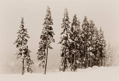 Photograph - Winter Trees - Sepia by Marilyn Wilson
