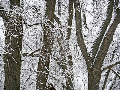 Winter Trees  Art Print by Aimee L Maher Photography and Art Visit ALMGallerydotcom