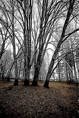Photograph - Winter Trees by Bonnie Bruno