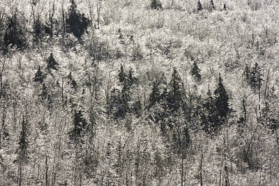 Photograph - Winter Trees Covered In Ice by Keith Webber Jr