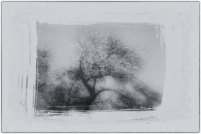 Winter Trees Art Print by David Ridley