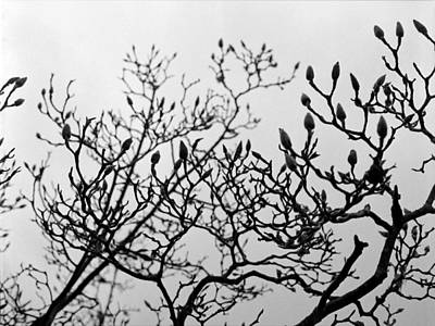 Photograph - Winter Trees by Luis Esteves