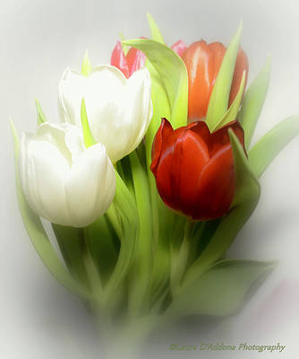 Winter Tulips Art Print by Laura DAddona
