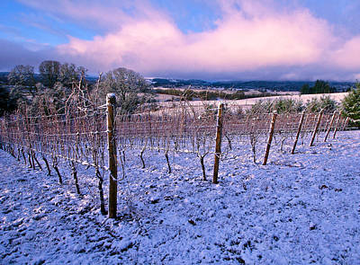 Photograph - Winter In The Vineyard by Jean Noren
