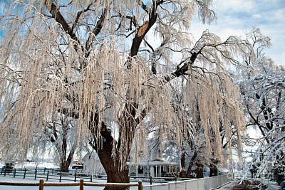 Photograph - Winter Willow by Harry Strharsky