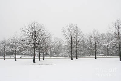 Photograph - Winter Wonderland by Eddie Lee