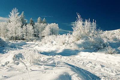Photograph - Winter Wonderland by Frank Townsley